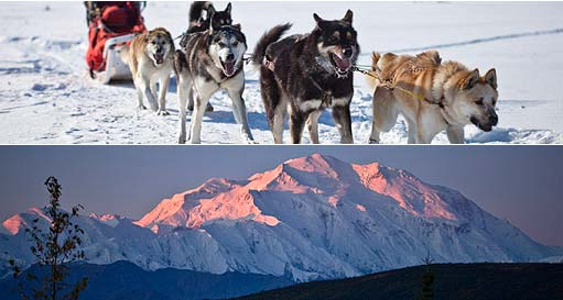 Two images - one of sled dogs in team, another of alpenglow turning Mount McKinley pink