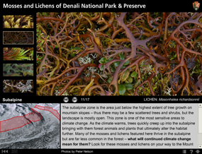 A screenshot of the eResource: Mosses and Lichen