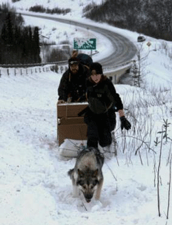 two people and a team of dogs travel a snowy train near a road