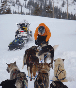person petting sled dogs in a snowy field, a snowmobile in the distance