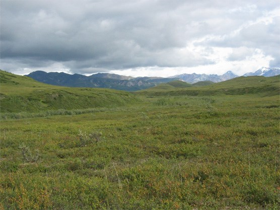 Rolling hills, with the Alaska Range in the distance
