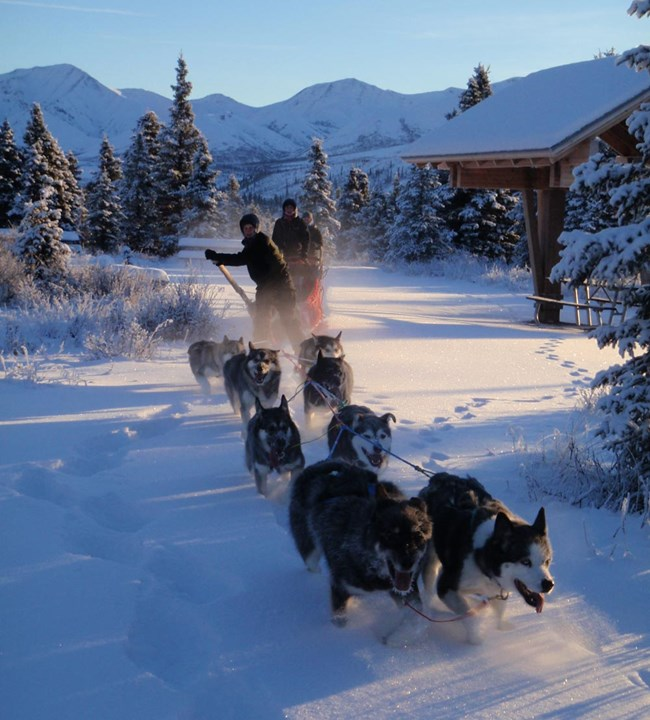 seven dogs pulling a sled and several humans through a snowy forest