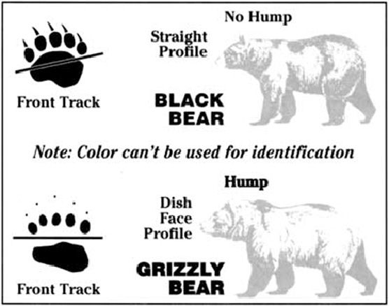 Know the difference between black and grizzly bears