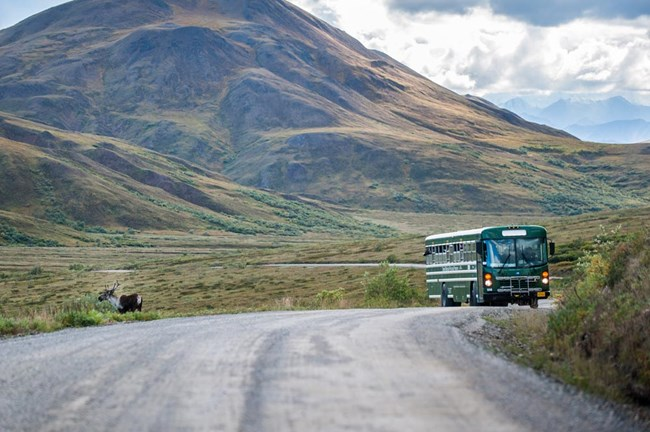 a green bus stopped on a dirt road with passengers looking out at a caribou