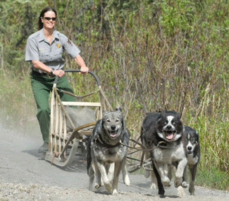 Sled Dog Demonstrations - Denali National Park & Preserve ...