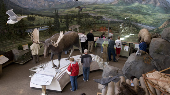 people looking at exhibits in a visitor center, including a life-size bull moose replica