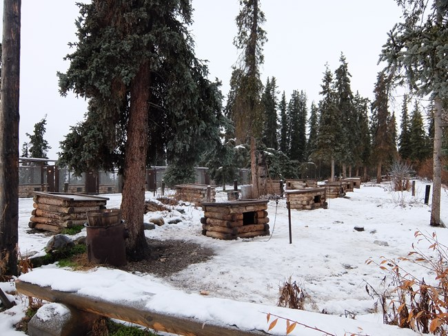 numerous dog houses in a snowy forest with no dogs in sight