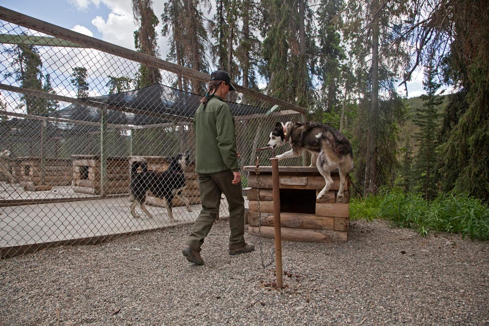 a ranger walking up to a dog, dog house and pen