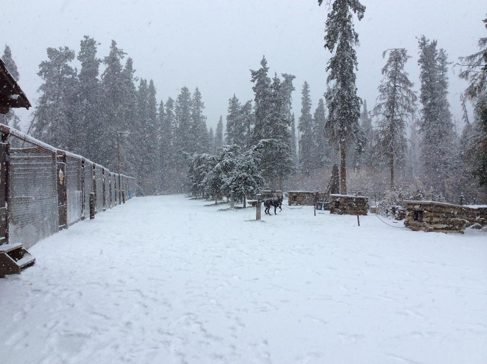 a snow covered dog yard
