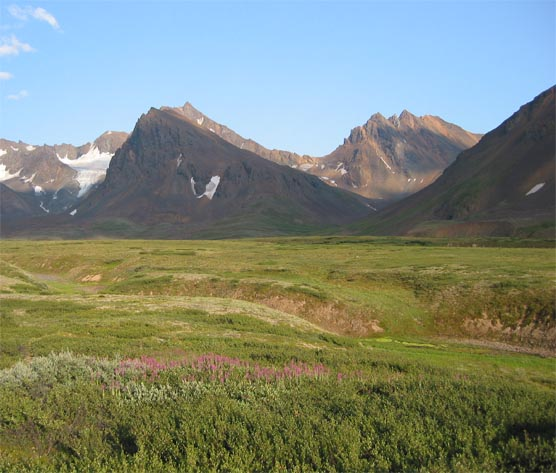 a green plain with short plants in front of steep, rocky mountains