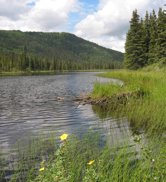 a lake, surrounded by trees, tall grass and yellow flowers
