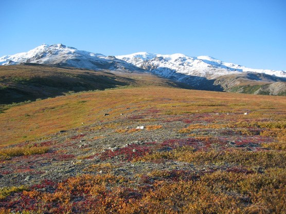 Fall colors on the tundra covering the north side of Healy Ridge