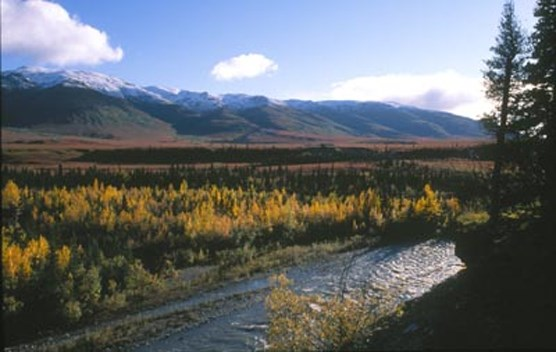 a shallow river flowing through forest with snow-capped mountains in the distance