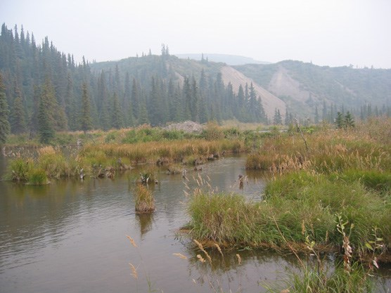 Beaver ponds along Moose Creek