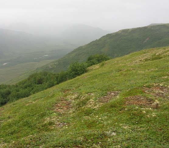 a grassy hillside looking over a small valley that is shrouded in mist