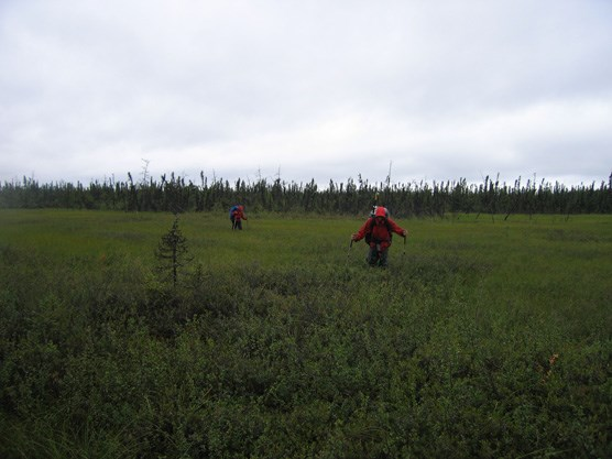 two people in rain gear hike through waist-high brush near a forest