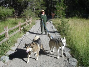 Superintendent Deanna Dulen walking her two huskies Tasha and Misha while respecting the leash regulation.