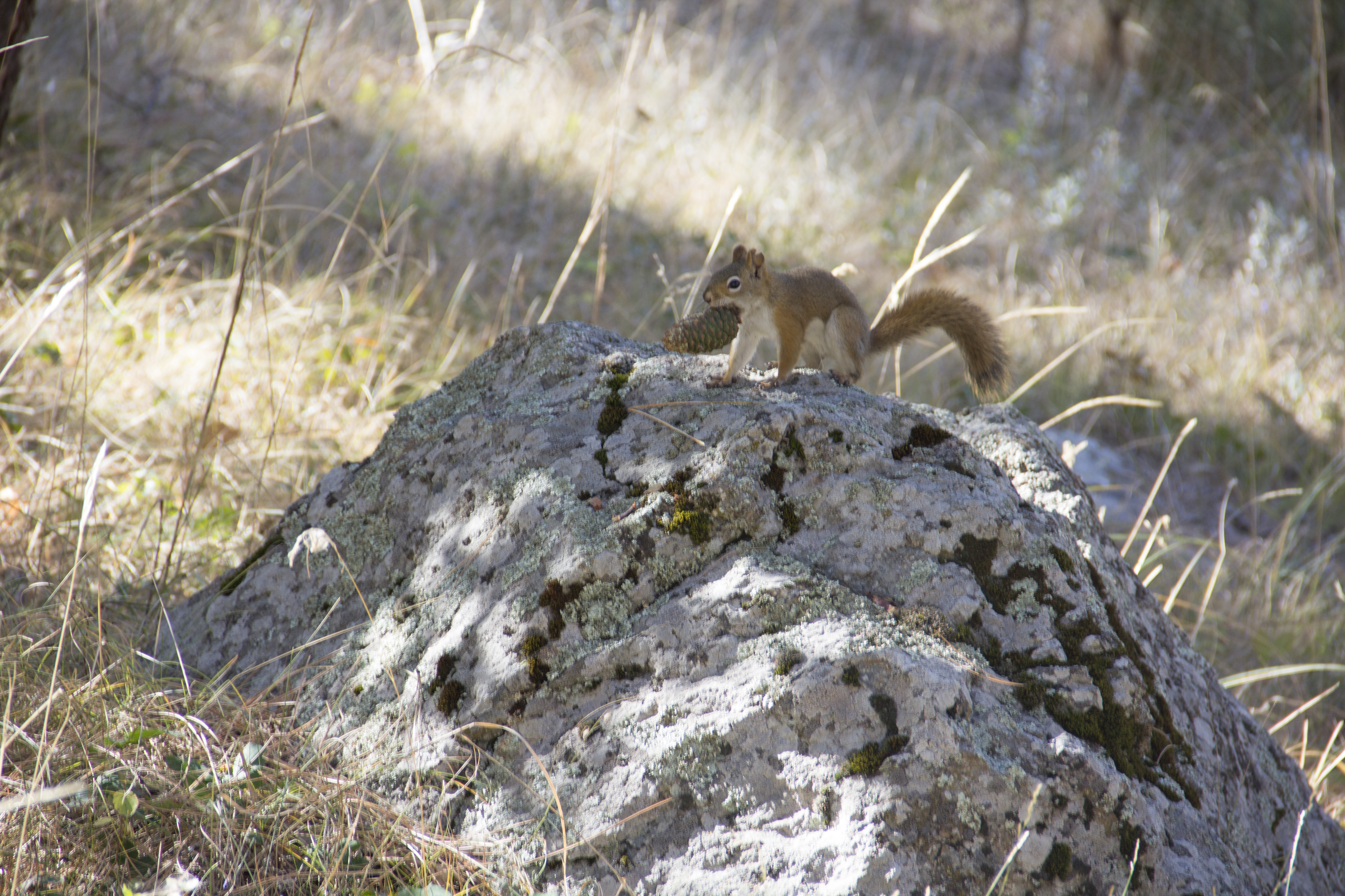 prairie dogs and other squirrels devils tower national monument