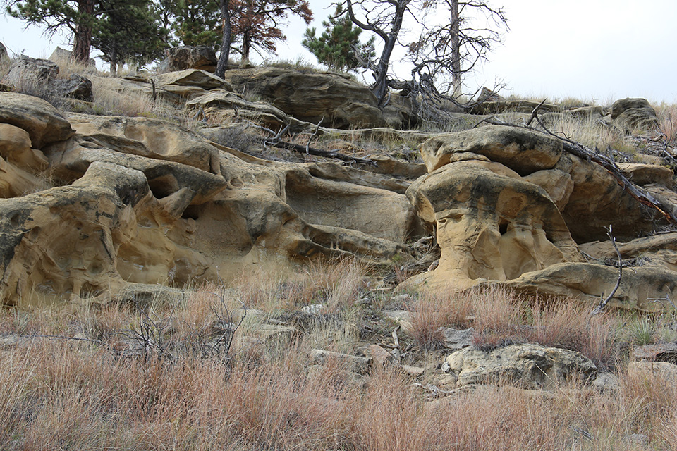 Geologic Formations - Devils Tower National Monument (U S  National