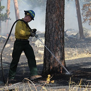 A wildland firefighter dousing smoldering ground at the base of a tree.