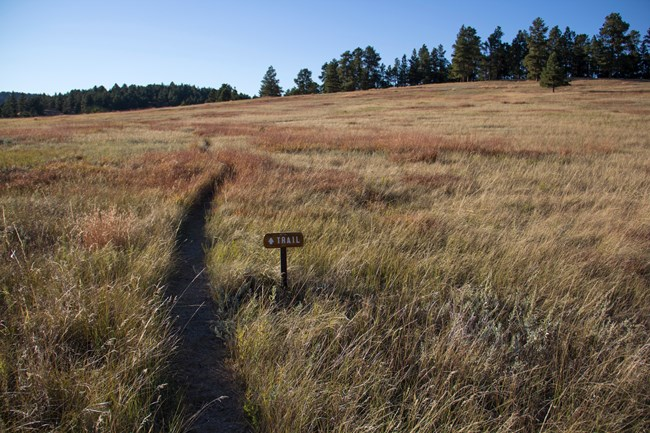 Trail winding through prairie grass with small trail sign in foreground and pine trees in background