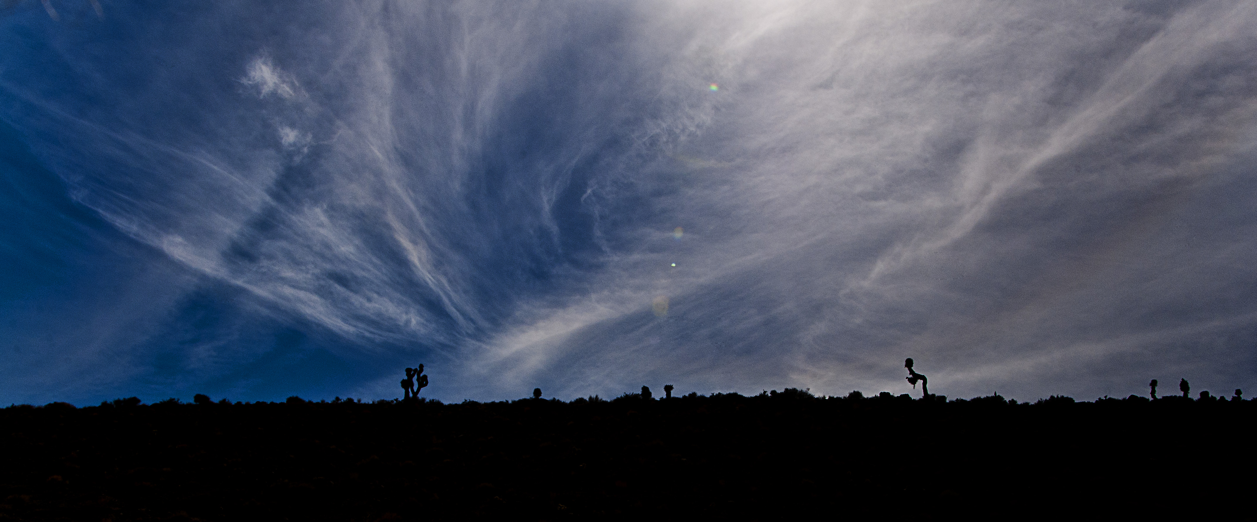 Joshua trees silhouetted upon a ridgeline against a wispy clouded sky