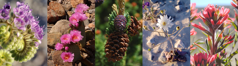 Plants - Death Valley National Park (U.S. National Park ...