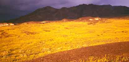 Spring bloom 1998