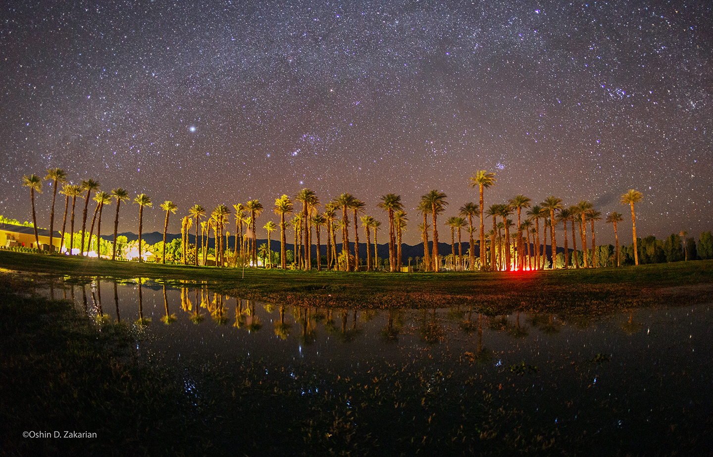 Stars reflect in the water while palm trees are illuminated with red and white light.