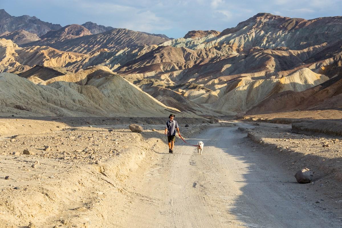 pets death valley national park u s national park service