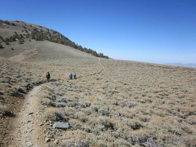 Three hikers walk up a winding alpine trail toward some trees.