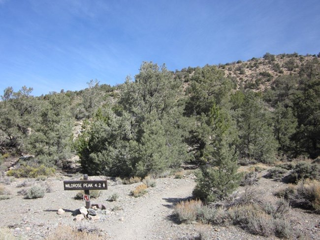 A sign at a trailhead points the way through the trees to Wildrose Peak located 4.2 miles away.