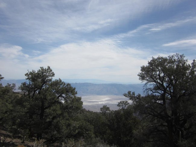 A view of a valley with salt flats is slightly obstructed at the forested viewpoint.