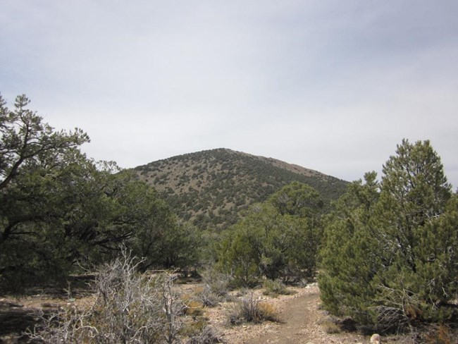 A trail between pine trees is overshadowed by a broad mountain peak in the distance.