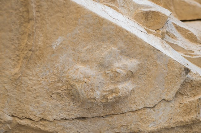 Fossilized footprint in canyon wall