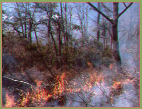 Fire burning through shrubbery in an open forested area.