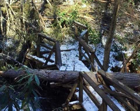 broken boardwalk and railing due to fallen trees and branches