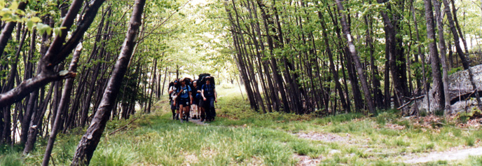 A group of backpackers walking through a forest.