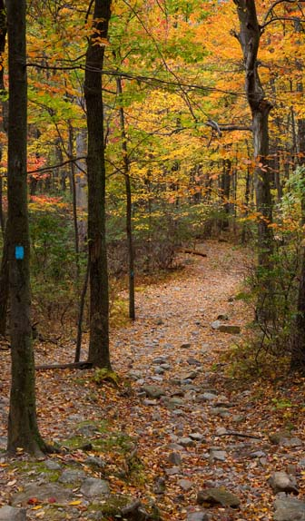 a trail in fall foliage