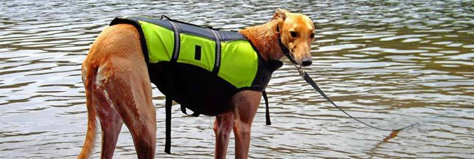 dog in a lifejacket standing in the river