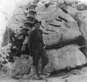 Paleontologist Earl Douglass stands in front of several dinosaur fossils imbedded in the rock.