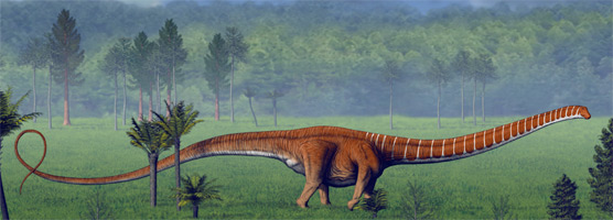 Artist rendition of Barosaurus