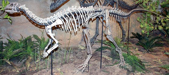 This Dryosaurus altus at the Carnegie Museum is the only mounted one in the world.
