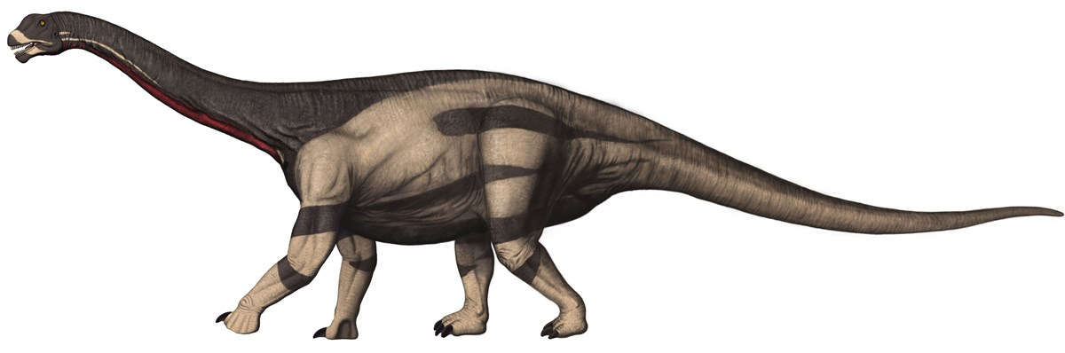 Artwork depicting a Camarasaurus dinosaur