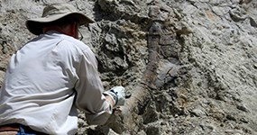 Paleontologist Brooks Britt working on a fossil at the DNM16 excavation site.