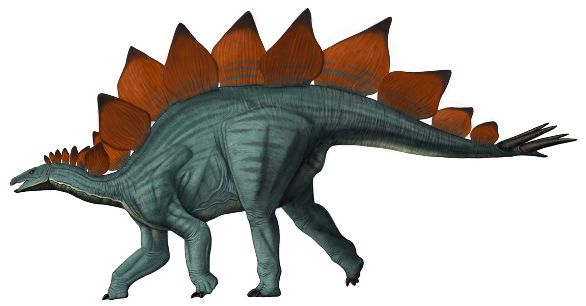 Artwork depicting a stegosaurus dinosaur