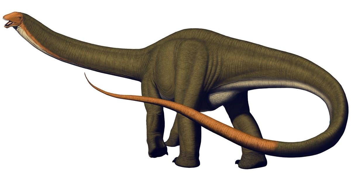 Artwork depicting an apatosaurus dinosaur