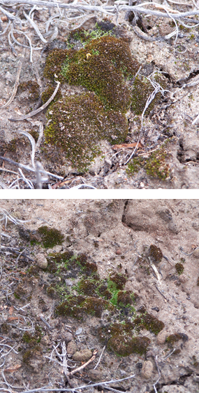 Two examples of biological soil crust.