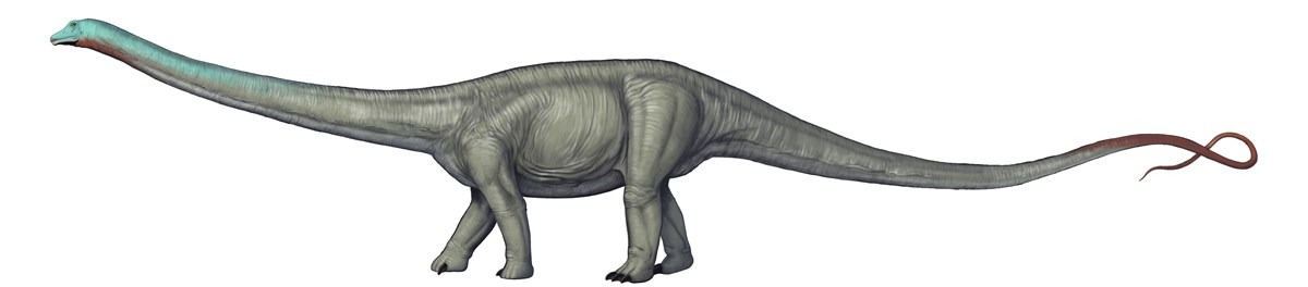 Artwork depicting a Diplodocus dinosaur