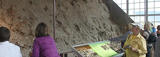 Visitors wander by the fossil wall at the Quarry Exhibit Hall at Dinosaur National Monument.